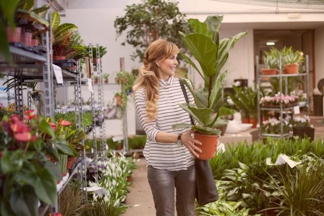Покупка комнатного растения
