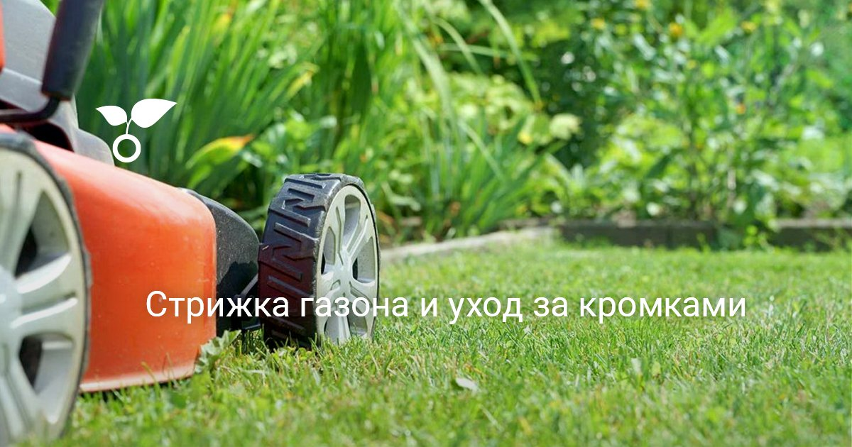 Когда и как правильно стричь газон