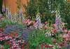 Цветник с наперстянками