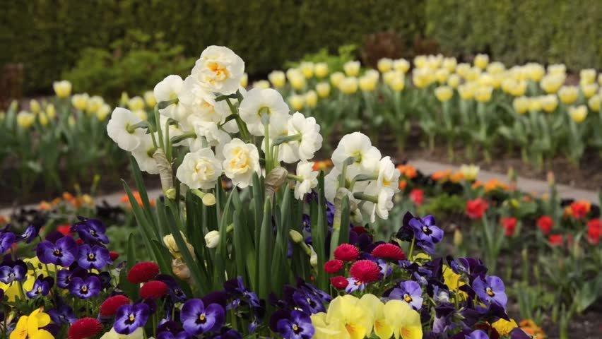 Narcissus-Bridal-Crown-3