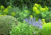 Грядка фитонцидных растений