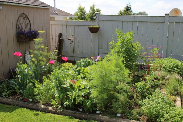 Уголок фитонцидных растений