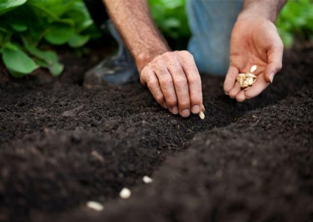 Весенний высев семян овощей в открытый грунт