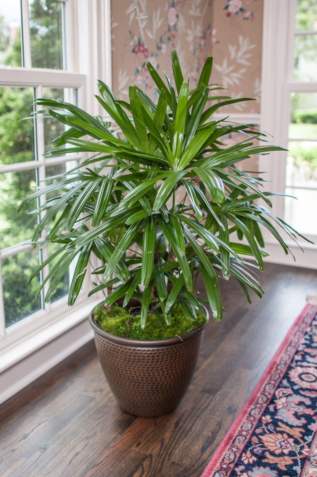 Домашние пальмовые цветы название и фото