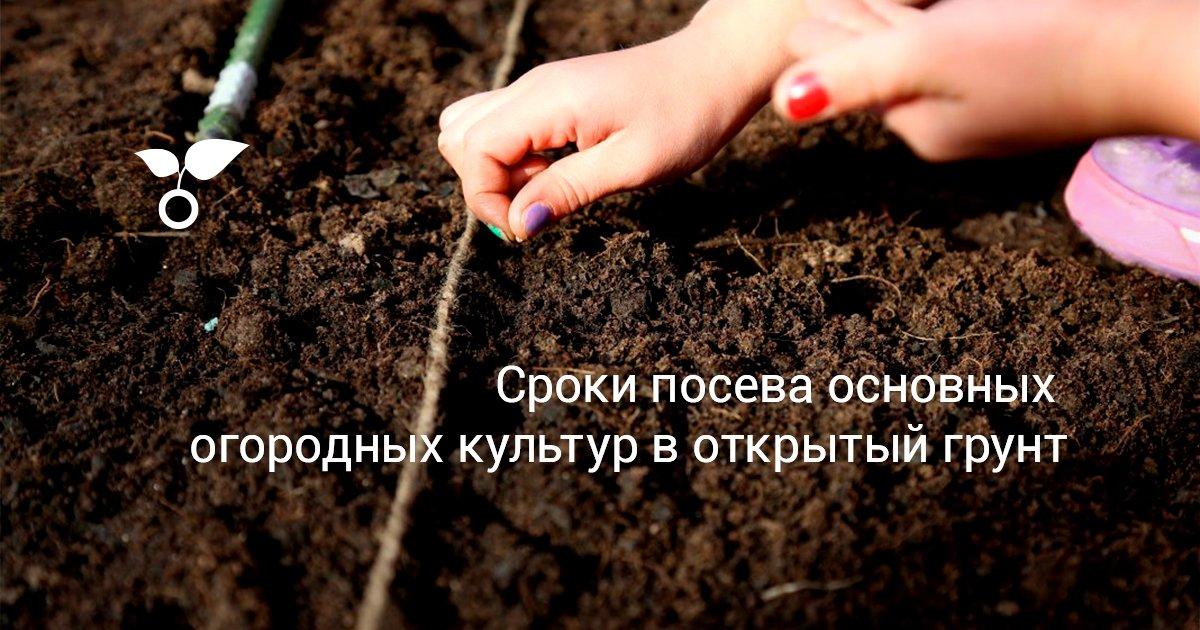 Как посадить семена помидор в открытый грунт