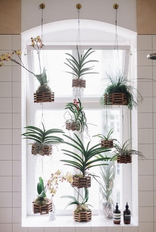 Комнатные растения в подвесных корзинках у окна