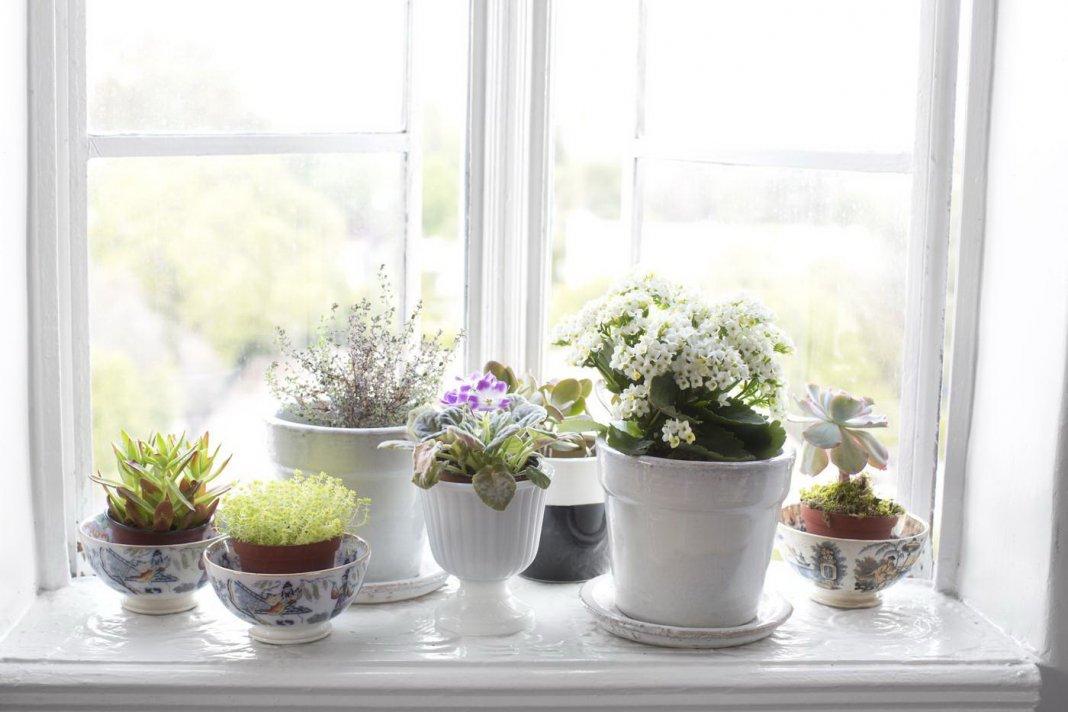 Цветы и декор на подоконниках