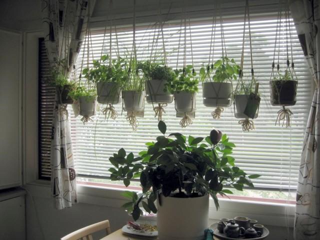 Комнатные растения у окна