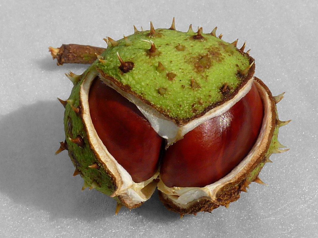 Aesculus-hippocastanum