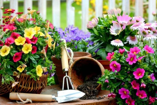 Высадка рассады декоративных растений