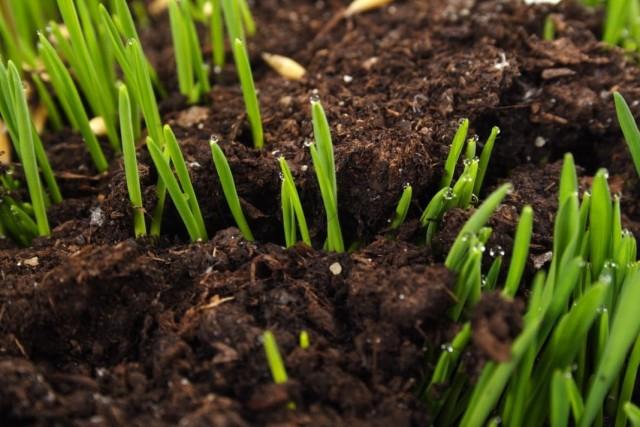 Раскисление почвы сидератами