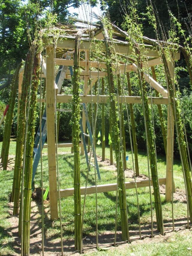 Процесс формирования беседки из живых деревьев