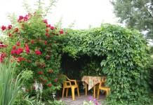 Живая беседка с розами