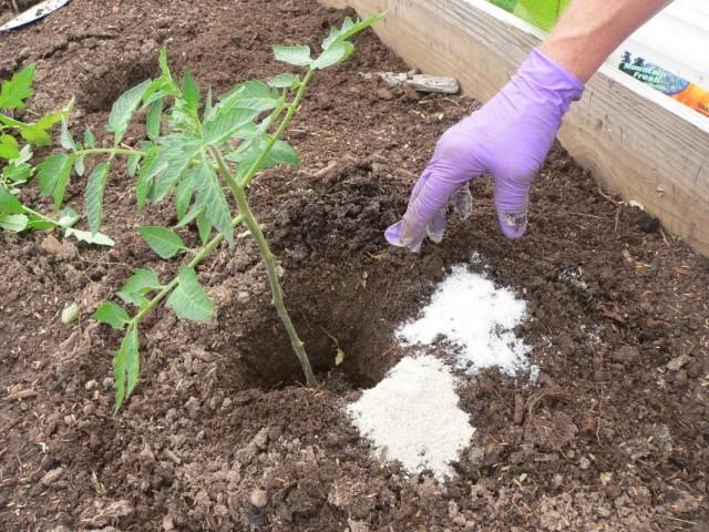Внесение органических и минеральных удобрений под томат