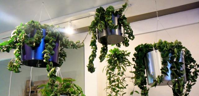 Комнатные растения под искусственным освещением