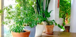 Комнатные растения при хорошем естественном освещении