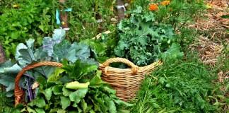Ранние овощи с огорода