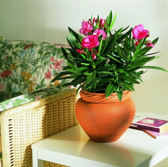 Комнатные цветы в нашем доме фото