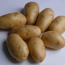 Сорт картофеля для Нижневолжского региона - Импала