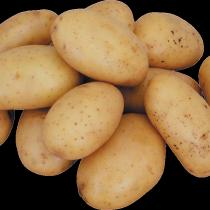 Сорт картофеля для Центрально-Черноземного региона - Винета