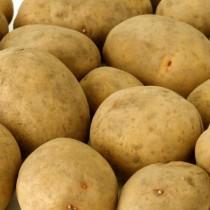 Сорт картофеля для Нижневолжского региона - Ярла