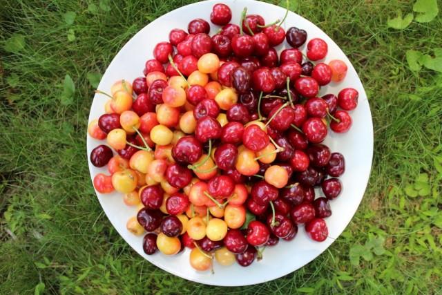 Разные по цвету плоды черешни