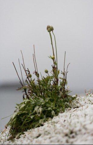 AK_2011_ARGENTINA_ushuaia_074K7112.jpg_big