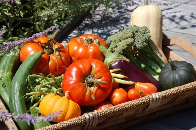 Урожай овощей в августе
