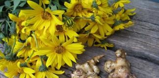 Цветы и клубни топинамбура