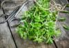 Заготовка зелени майорана