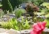 Декоративные растения возле пруда