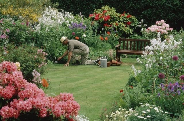 Уход за цветниками из многолетних растений