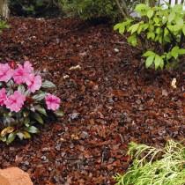 Мульчирование цветника из многолетних растений