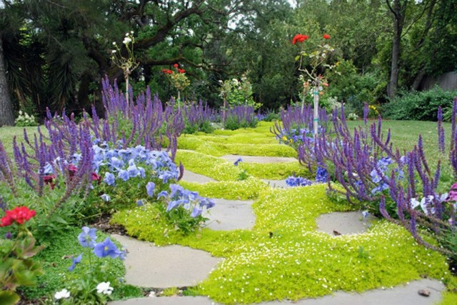 Использование в цветниках почвопокровных растений, устойчивых к вытаптыванию