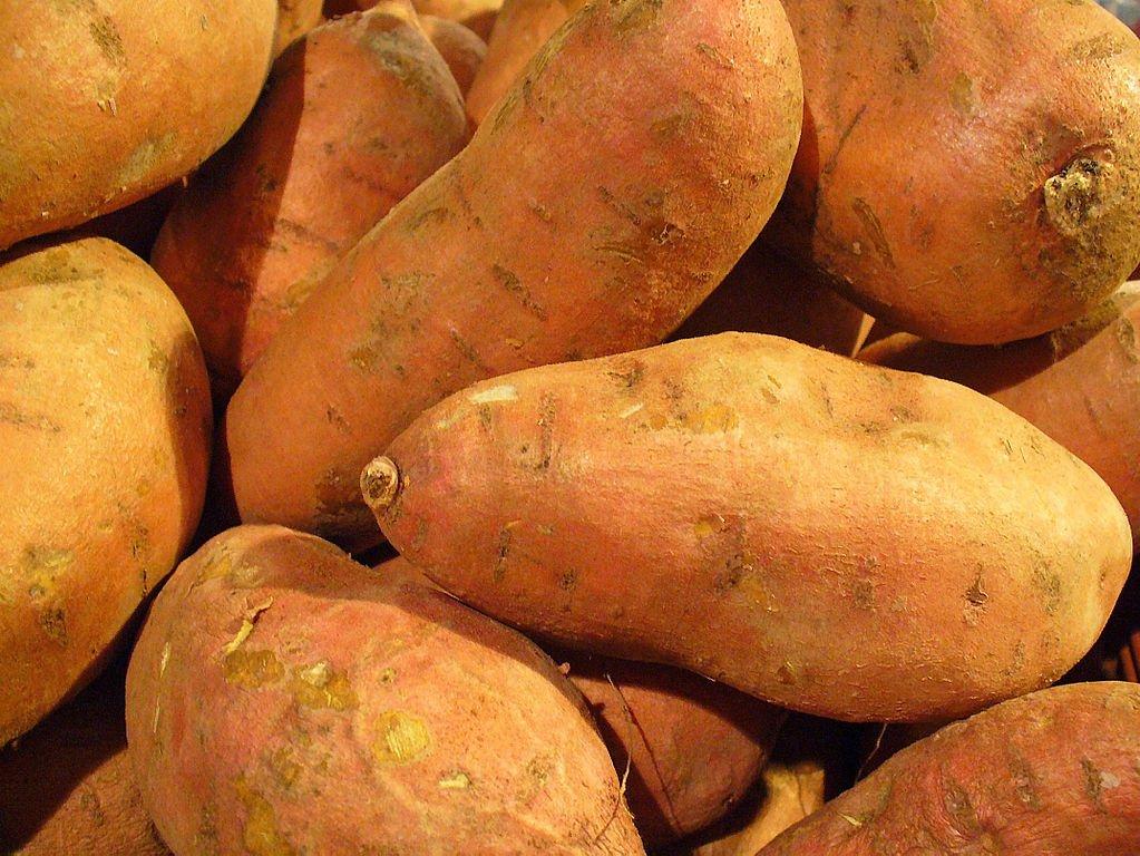 Ipomoea-batatas
