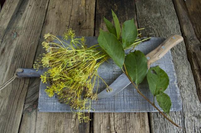 Подготовим для квашения зонтики укропа и листья вишни
