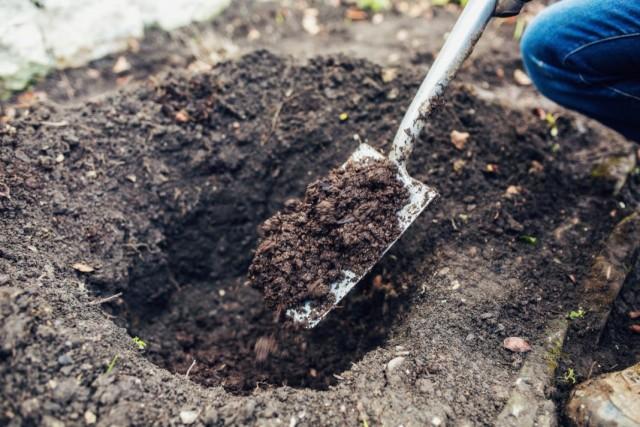 Внесение компоста как натурального удобрения