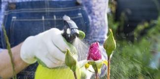 Применение пестицидов в цветнике