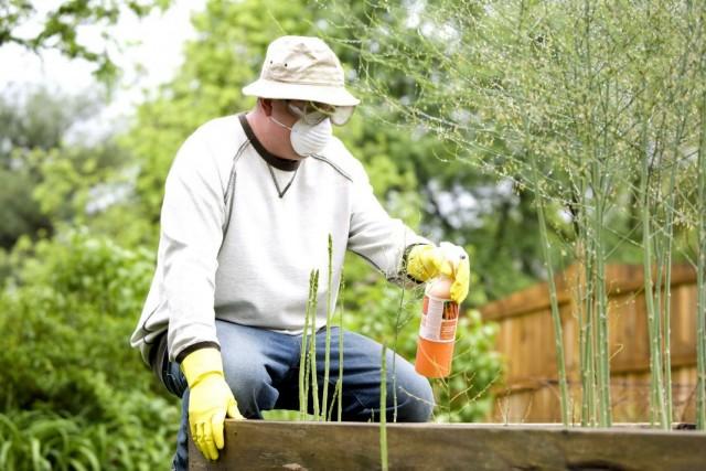 Применение пестицидов на огородных культурах