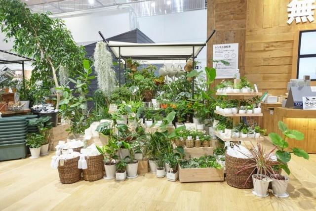 Павильон продаж комнатных растений в торговом центре