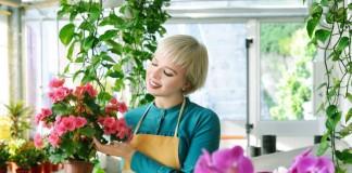 Специализированный магазин комнатных растений