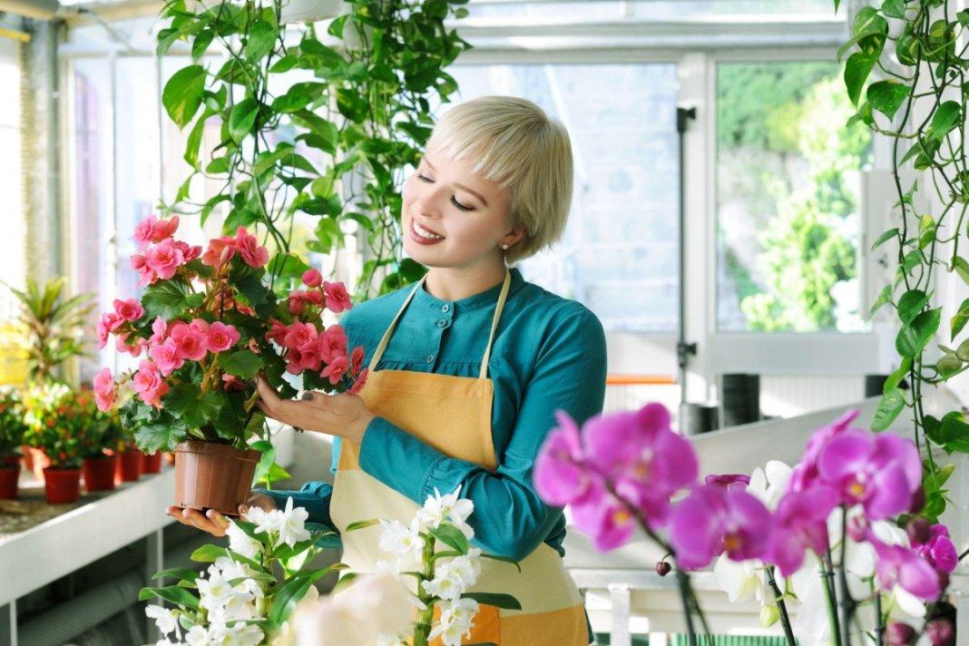5fcbf21f2874 Где покупать комнатные растения  Особенности покупки комнатных ...