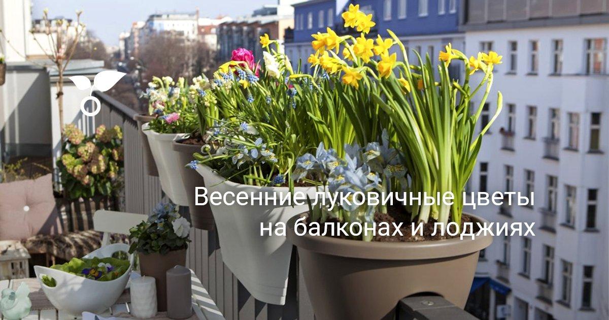 Разведение цветов на балконе