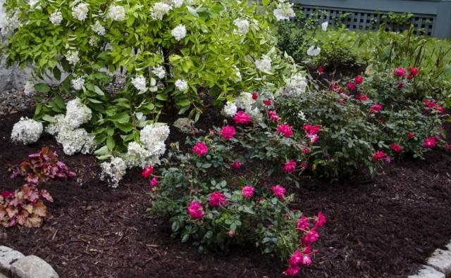 Гортензия с миниатюрными розами