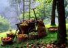 Сбор и подготовка к хранению урожая яблок