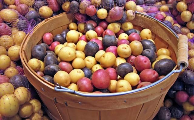Отбор и подготовка семенного картофеля к хранению