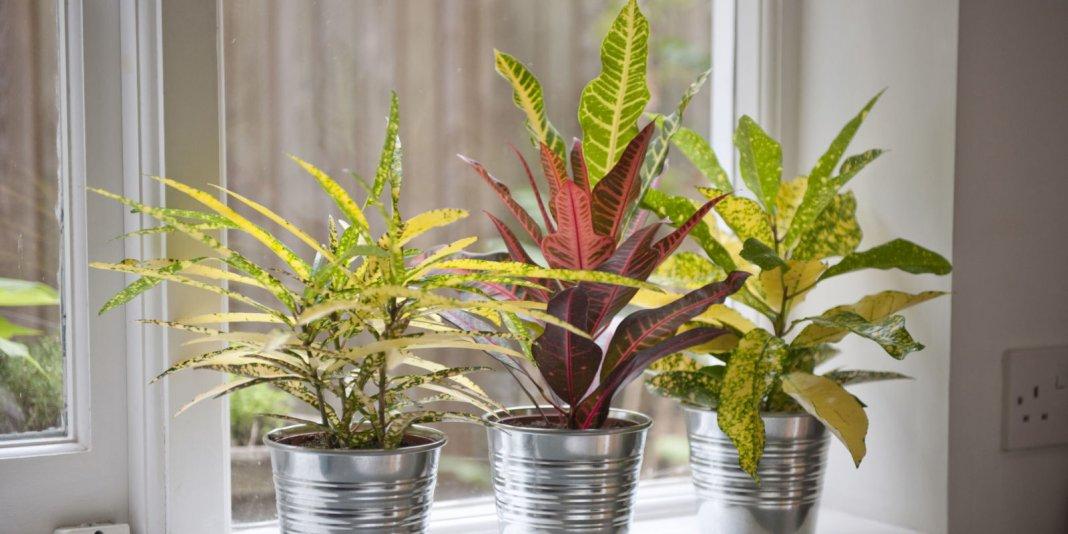 Ru - Pretty indoor plants ...