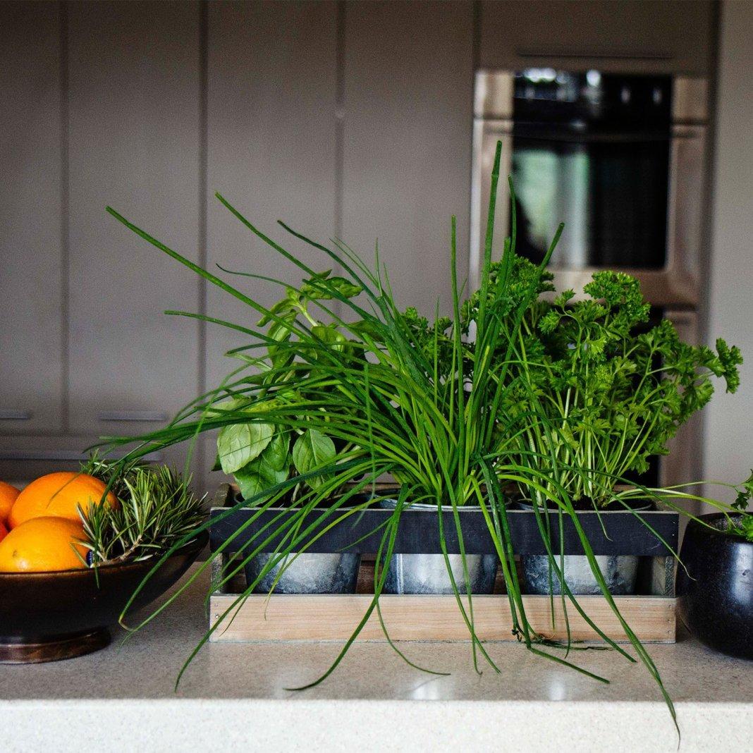 Какую зелень можно перенести с огорода в дом осенью