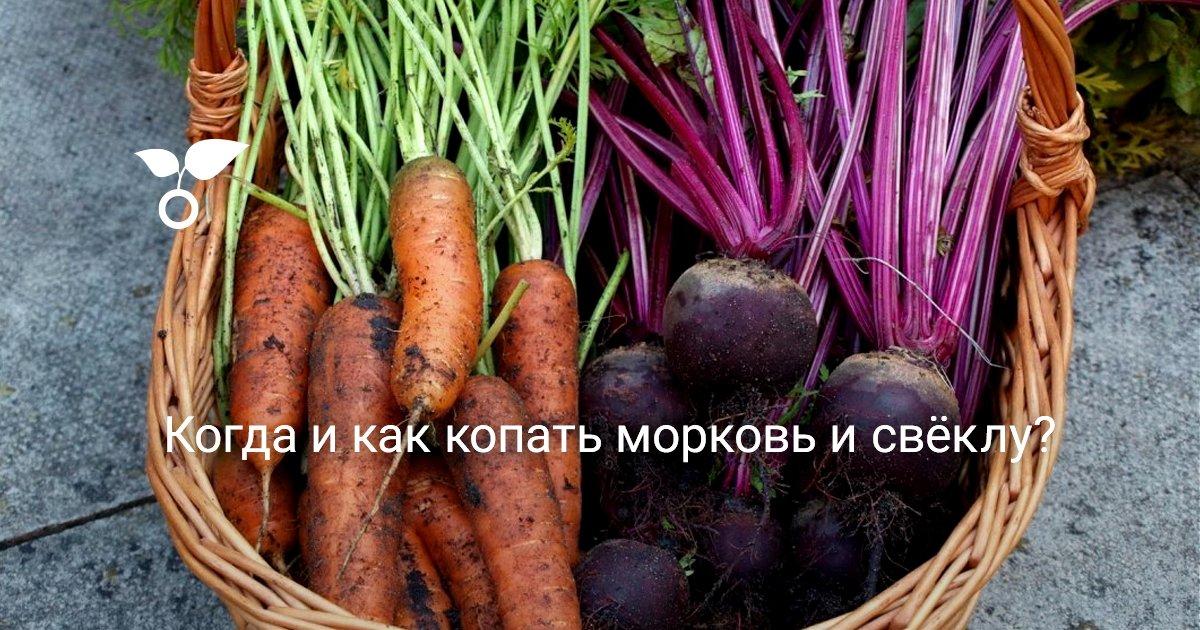Как хранить морковь в домашних условиях в квартире на балконе