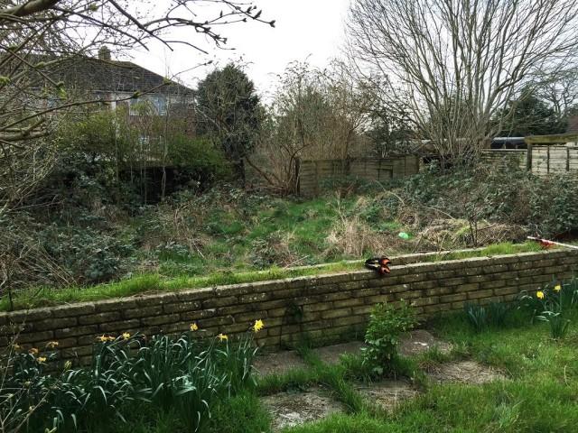 Запущенная часть садового участка
